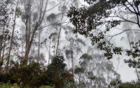 caminata ecologica patiobonito bojacá ecoturismo colombia