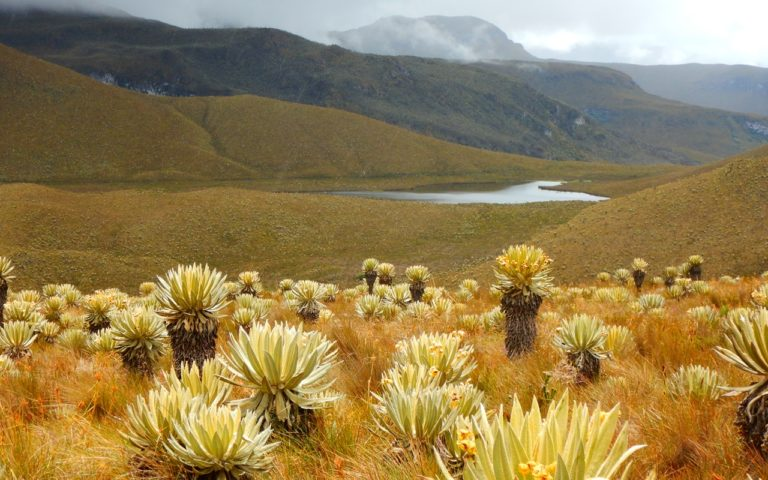 expediciones-santa-isabel-laguna-otun-ecoturismocolombia