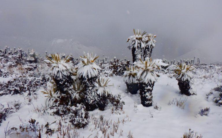 expediciones-glaciar-nevado-del-tolima-ecoturismocolombia