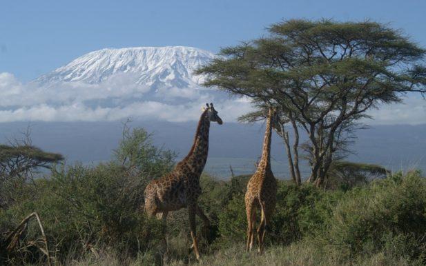 expedicion-kilimanjaro-serengeti-ngorongoro-ecoturismocolombia